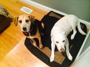 Kona, sharing Jones' dog bed.