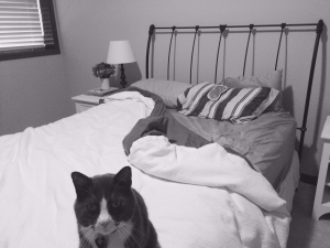 I spend half my nights sleeping in my guest bedroom. Sometimes, the cat joins me. Mostly, I am alone.